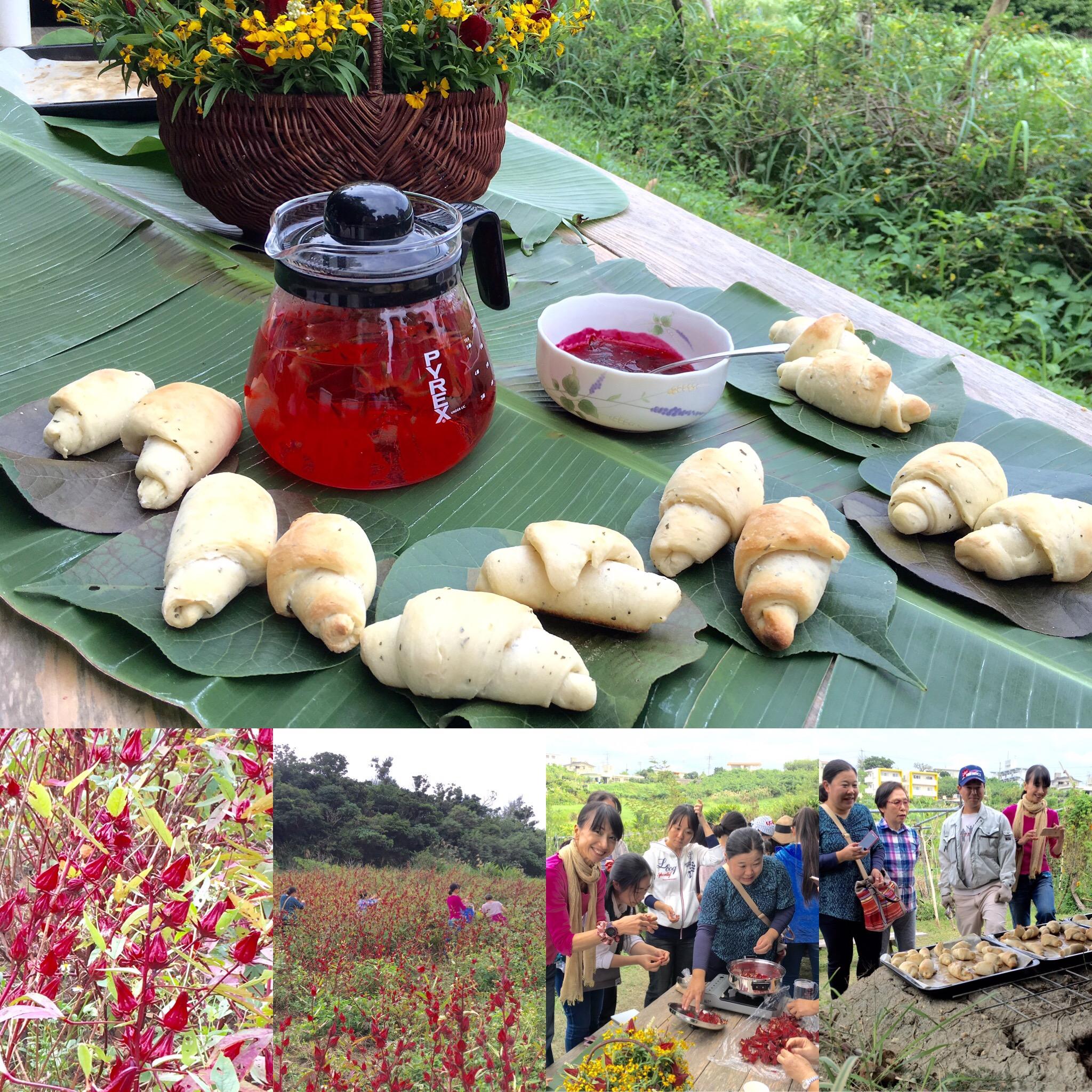(伝統野菜研究会)-活動報告-沖縄食育ツアー ローゼル収穫体験など